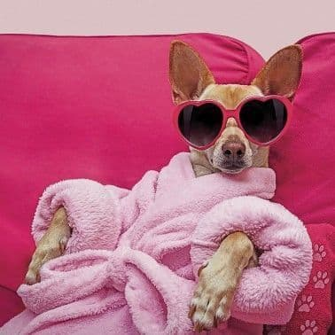 Chihuahua with Heart Sunglasses